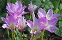 各种水仙花的花语和象征寓意,快来看看你都知道吗?