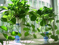学校班级里最适合养的植物,选择一些