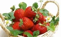 草莓盆栽如何种植?  家庭阳台草莓种植方法