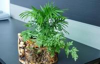 在办公室最适合摆放的植物,看着心情也会变的舒畅