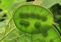 """世界上形状奇奇怪怪的两种植物,被称作""""年度忠实"""""""