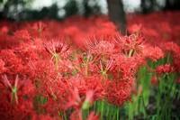 草本植物名称,草本植物分类