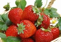 """草莓白粉病怎么防治?浇水遵循""""宁干"""