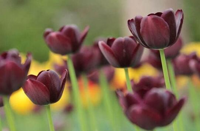 盘点10种最香最美花卉(附带图片)