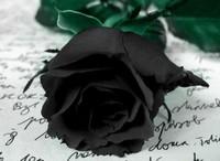黑玫瑰的花语是什么,黑玫瑰代表含义