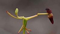 世界上最奇怪的两大植物,味道像是生肉