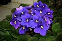 15种开花的室内植物,在明亮的光线下,湿度下茁壮成长
