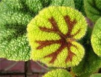 8种不常见的珍稀植物,见过的人真不多,快来看看你都见过几种?