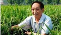 水稻病虫害如何防治效果最佳?稻瘟病的防治方法