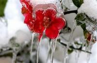 冬季鲜花养护小妙招,你还知道哪些?