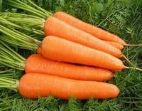 阳台怎么种植胡萝卜阳台种植胡萝卜应当要怎么做呢?