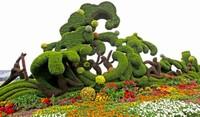 自然植物艺术手工创作,'舞'动双手,变'叶'为宝