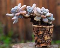 名字中植物艺术,让你的名字不在简简单单