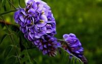 10种清新花卉,让心情四季如花开