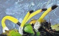 世界上非常奇特罕见的五大植物,见过的人真的不多