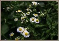 想要每天心情美美哒这几种花卉就一定不能错过,看着心情都变美