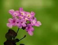 什么花的花期最长一年四季都开花