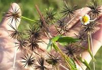 日常生活中常见药用植物,快来一起看看吧