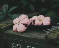 以花入馔,留香齿颊——让春天留在舌尖