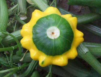 世界上罕见的四种蔬菜,蔬菜大家族中的新贵