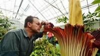 世界上十种最奇特的花卉花语,你都知道几种