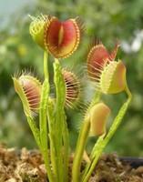 有哪些神奇有意思的植物 10种最有趣的植物