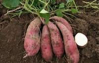 常见的四种蔬菜泡水里就能活?超简单的种菜方法