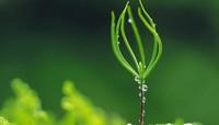 你知道哪些植物适合摆放在什么位置吗?