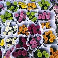 常见菊科植物的介绍!菊花的种类繁多,你又认识几种呢?