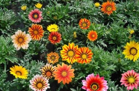 四种好看的花卉,养起来不会特别的单调
