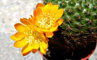 15种花卉植物图片大全,快来看看你都知道哪几种吧