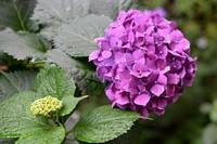 夏天最有代表性的花 夏天开的花有哪些