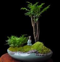 小叶紫檀盆景怎么养 有哪些注意事项呢?