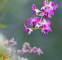 哪些花不能用土养,这些花一浇水就烂