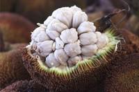 这些奇特的水果,样子长得太任性,'不忍直视'?