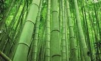 手艺简直绝了,竹子居然还能做出这种东西,栩栩如生