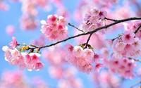 每个国家都有一种花被称为国花,中国的国花是什么花?