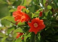 夹竹桃的病虫害以及防治方法,掌握方法及时救治