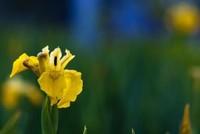 代表友谊的花 象征友谊一辈子的花