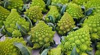 """6种很""""奇葩""""的蔬菜,造型奇特味道好,你吃过几种呢?"""