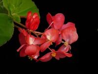 常见除甲醛的这4种植物,除甲醛之王当之无愧