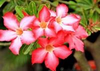 超级好养的六种植物,绝对不会养死的植物